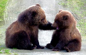 relating to little cubs can be tough. via the google.