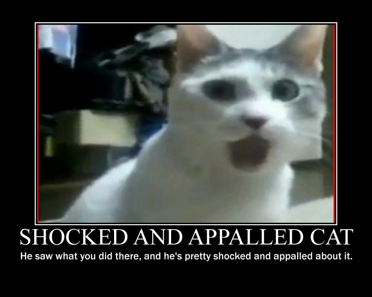 Shocked_and_Appalled_Cat_by_Rourke1708